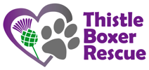 Thistle Boxer Rescue Logo